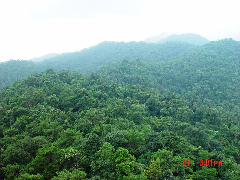 季风林林相