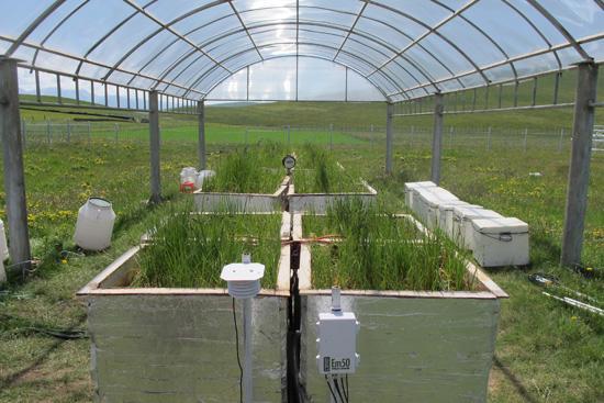海北站水位-氮沉降控制对高寒草地生态系统影响观测系统