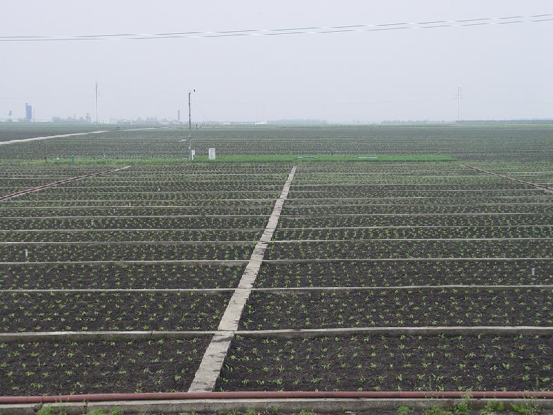 共16个处理, 4次重复,各小区面积见表1,随机排列,试验地总面积3225.6m2。小区间用防水材料隔离。