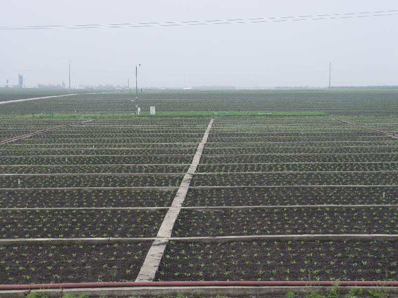 在小区中央设置一根中子水分管,每5天观测一次不同土壤层次水分含量。