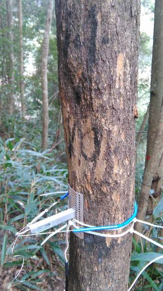 常绿阔叶林综合观测场生物监测设施\会同站常绿阔叶林综合观测场永久样地14-10树木径向生长仪