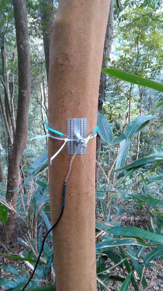 常绿阔叶林综合观测场生物监测设施\会同站常绿阔叶林综合观测场永久样地13-12树木径向生长仪