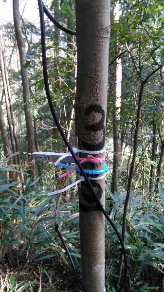 常绿阔叶林综合观测场生物监测设施\会同站常绿阔叶林综合观测场永久样地3-3树木径向生长仪