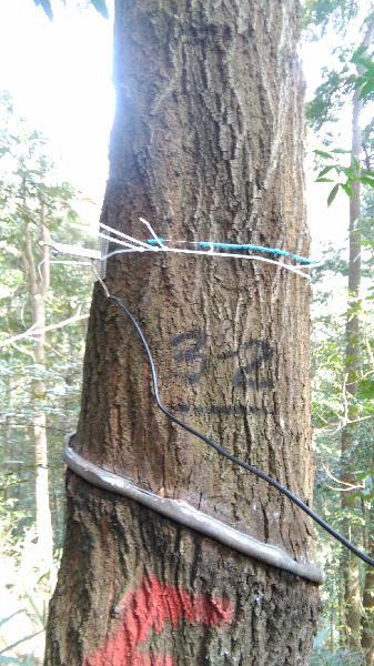 会同站常绿阔叶林综合观测场永久样地3-2树木径向生长仪