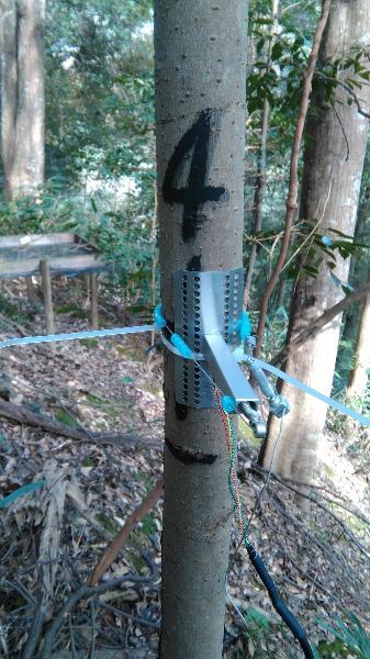 常绿阔叶林综合观测场生物监测设施\会同站常绿阔叶林综合观测场永久样地4-7树木径向生长仪