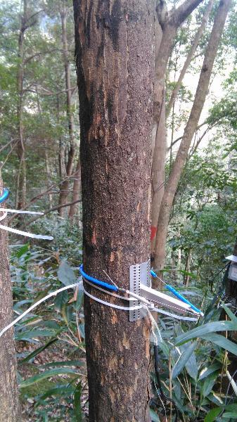 常绿阔叶林综合观测场生物监测设施\会同站常绿阔叶林综合观测场永久样地14-11树木径向生长仪