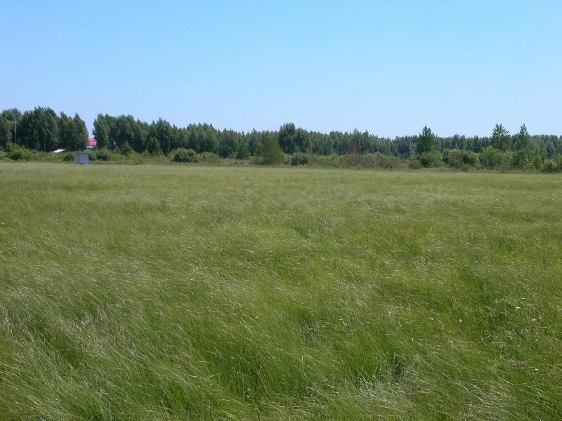 常年积水区综合观测场内夏季毛苔草郁郁葱葱景色怡人