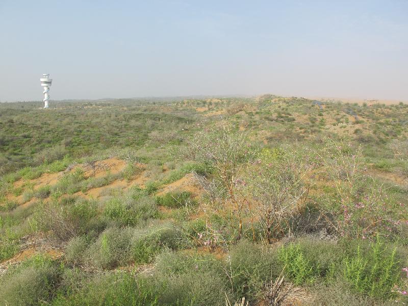 人工固沙植被综合观测场