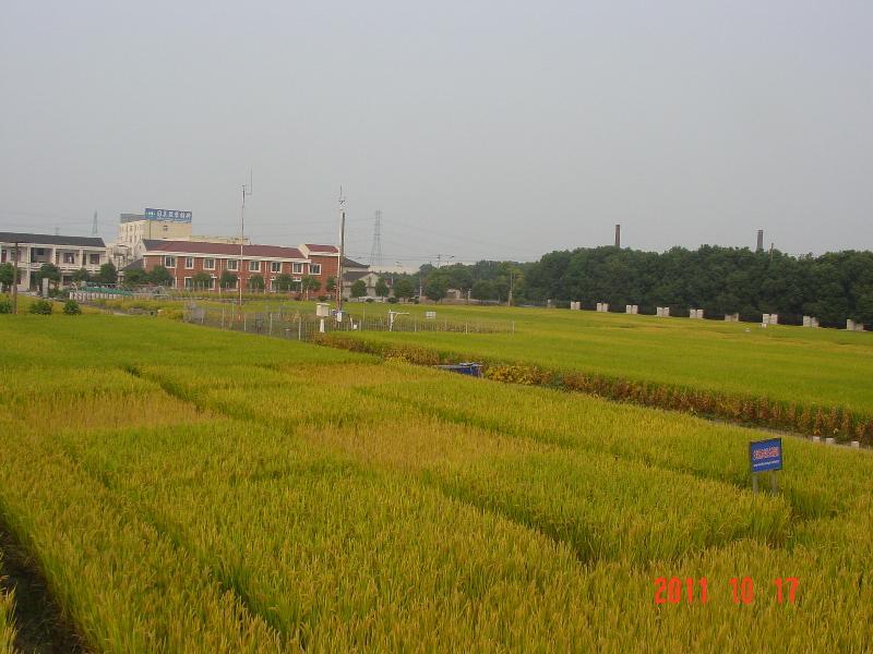 此景观图片为常熟站综合观测场稻季景观照片