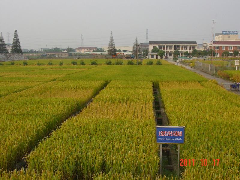 此景观照为此样地稻季蜡熟期照片。