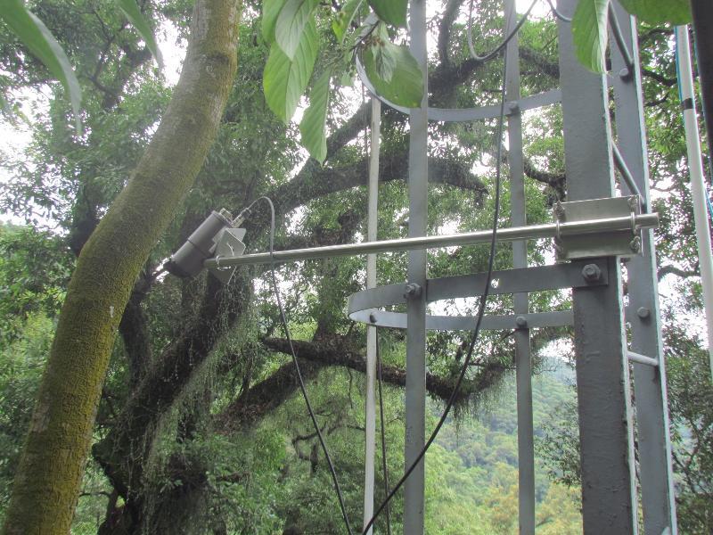 季风林铁塔生长节律监测