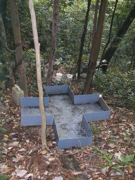 1季风林DHFZH01CCJ_01穿透水