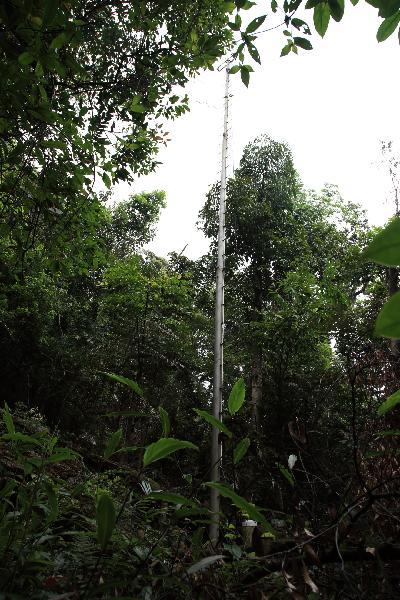 林冠降雨-季风林