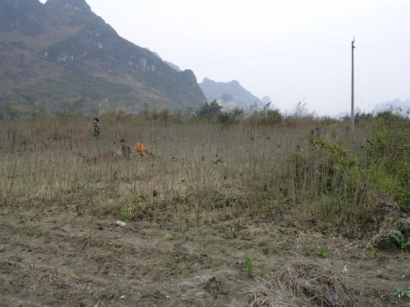 环江站地罗村桑地土壤、生物长期采样地