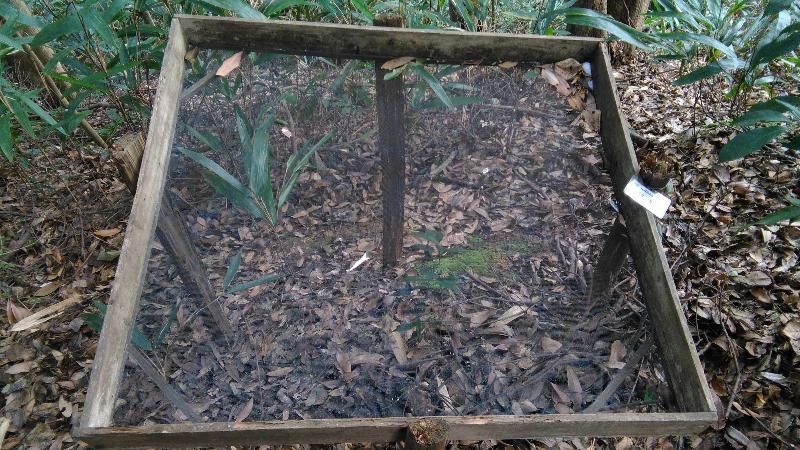 常绿阔叶林综合观测场永久样地9号凋落物收集框